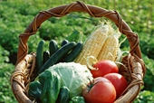 Agricultural Products/Processed Foods