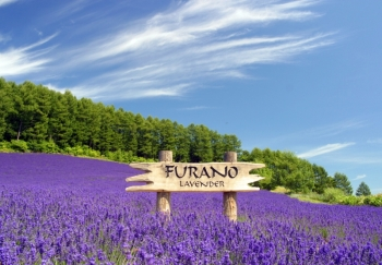 Furano Winery & Furano Wine House